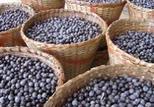 Organic Freeze Dried Acai Berry