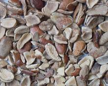 Organic African  bush   mango  seed (Irvingia Gabonesis)