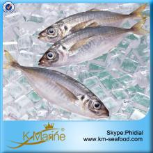 BQF Priced Fish Horse Mackerel