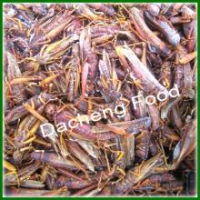Frozen Grass Hoppers(cooked/boiled)