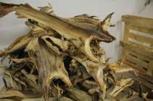 Dried Anchovy Fish Available Stock