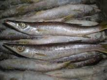 Frozen Fish Mackerel, Sardine Fish Prawns and Ther Fish Types
