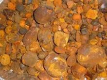 ox and cow gallstones