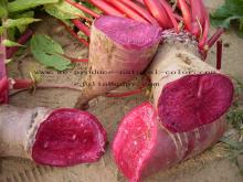 Pigment supplier radish red