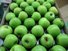 Fresh granny smith apple Hot Sale