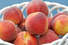 fresh red and yellow peaches Grade A