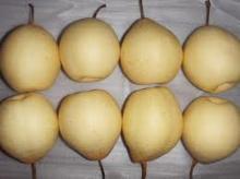 High Nutritious New Fresh Ya Pear