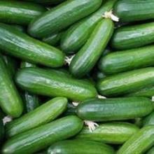Fresh cucumber Grade A
