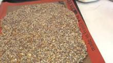 Sunflower Seed Meal for animal feed