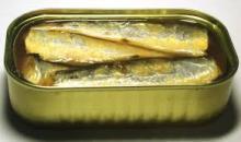 Fish / Sardinella Aurita