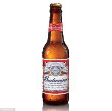 Budweiser Beer from U.K