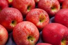Fresh royal gala apple(hot sale)