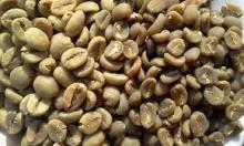 Hot Sale Robusta Green Coffee Beans