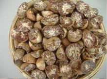 Whole and Split Betel Nut Grade A