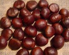 Fresh chestnut Hot Sale
