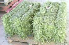 High Protein Sun Dried Alfalfa Hay