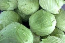 Fresh Cabbage Good Quality