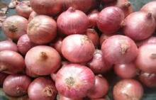 Fresh Onion Grade A