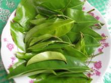 leaves graviola