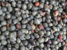 Terebinth Berry Oil Wholesale Natural Herbal Essential Oil