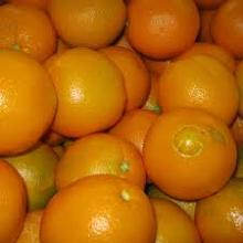 FRESH NAVEL ORANGES FROM SOUTH AFRICA