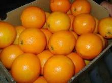 Fresh navel orange for sale