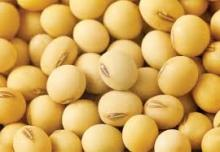 Soybean seeds for making edible oil