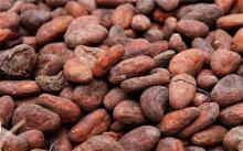 Cocoa Oil in Bulk Wholesale