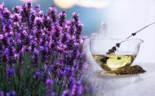Lavender Oil in Bulk Wholesale Natural Just Essential Oil