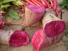 Chinese pigment supplier anthocyanin radish red pigment