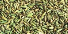 Fennel Seed Oil in Bulk Wholesale Natural Oil