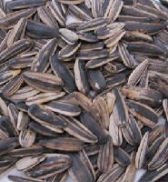 Sunflower Seeds 50KG/PP BAGS