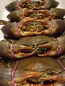 Live Fresh Water Crab