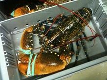 Frozen lobsters/ Crabs/ shrimps