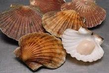 how to cook frozen scallops in shell