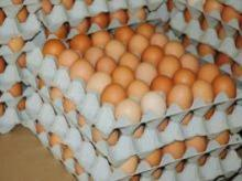 FRESH BROWN POULTRY EGGS
