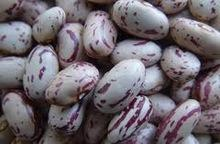 Light Speckled Kidney Beans Long Shape