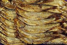 smoked sardine