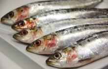 smoked sardine for sale