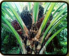 Crude Palm Oil, Refinded Sun Flower Oil, groundnut Oil