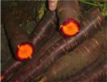Black   Carrot  Juice Powder