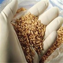 2015 high quality wheat grain for hot sale