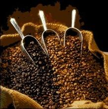 High Quality Green Arabica Organic Coffee Beans