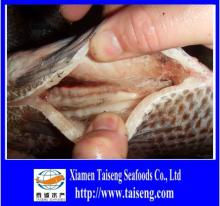 gutted   scaled  frozen tilapia fish