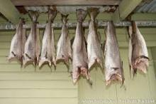 Norway Dry Stock Fish Cod for sale