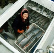 Salmon Fish---