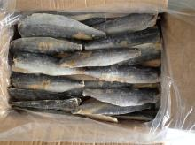 frozen spanish mackerel fillets Grade B