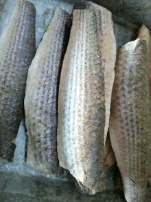 frozen grey mullet fillets