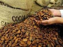 Wholesale cocoa beans