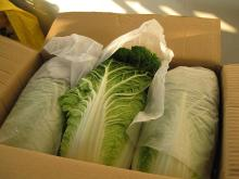 Fresh Chinese Cabbage hot sales
